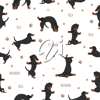 Yoga dogs poses and exercises. Dachshund seamless pattern. Vector illustration