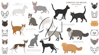 Domestic cat breeds and hybrids collection isolated on white. Flat style set. Different color and country of origin. Vector illustration