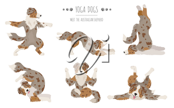 Yoga dogs poses and exercises. Australian shepherd clipart. Vector illustration