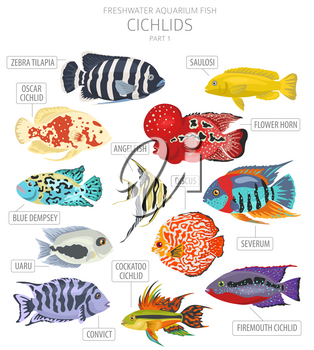 Cichlids fish. Freshwater aquarium fish icon set flat style isolated on white.  Vector illustration
