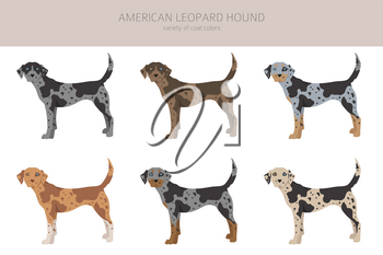 American leopard hound all colours clipart. Different coat colors and poses set.  Vector illustration