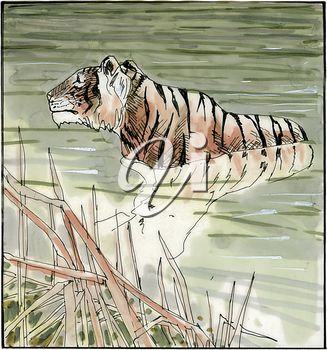 Royalty Free Clipart Image of a Tiger Taking a Swim