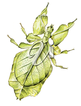 Royalty Free Clipart Image of a Leaf Bug
