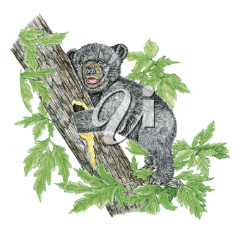 Royalty Free Clipart Image of a Black Bear Cub Getting Honey from a Tree