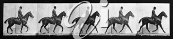 Royalty Free Photo of a Horse and Rider Runner
