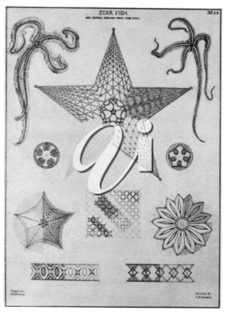 Royalty Free Clipart Image of a Star Fish and it's Patterns