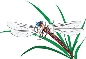 Illustration of dragonfly on grass on a white background