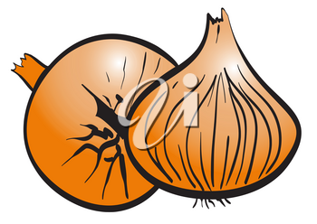 Illustration of the two ripe onions on a white background