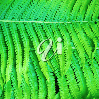 Bright green fern leaves as a background.