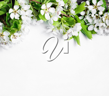 Blank background and spring flowers. Copy space for your text. Flat lay.