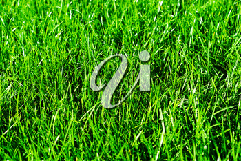 Horizontal vivid green summer grass bokeh background