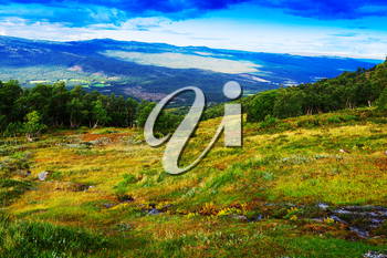 Classic Norway mountain forest landscape background hd