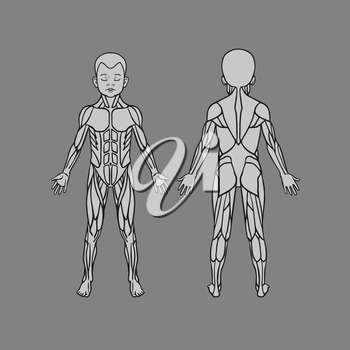 Anatomy of child baby kid muscular system, exercise and muscle guide. Child muscle vector outline clipart, front and back view.