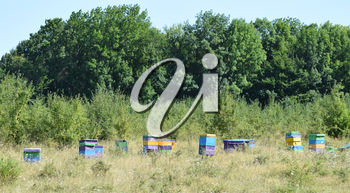 Colourful beehives. Small apiary in the foothills.