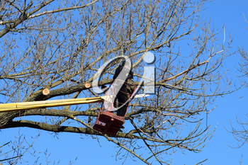 Pruning trees using a lift-arm. Chainsaw Cutting unnecessary branches of the tree. Putting in order of parks and gardens.