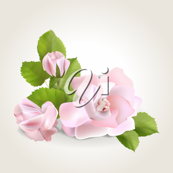 Spring soft realistic rose isolated on white, vector illustration