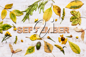 Word September on a wooden background with yellow leaves. View from above, flat. Concept of Autumn