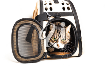 The cat sits in a carrying bag for transportation on a white background