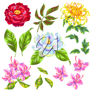 China flowers set. Bright buds of magnolia, peony, rhododendron and chrysanthemum.