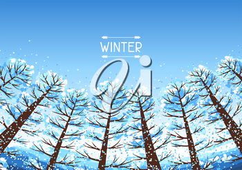 Winter forest background with stylized trees. Seasonal illustration.