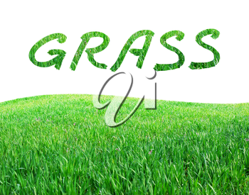 Isolated grass. Element of design.