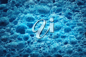 Macro of biological texture. Element of design. Cell blue background.