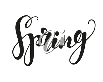 Calligraphic Lettering. Spring text isolated on white. Vector illustration