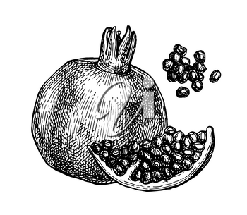 Pomegranate and seeds. Ink sketch isolated on white background. Hand drawn vector illustration. Retro style. Editable objects.