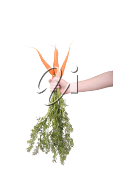 hand holding a bunch of carrots on white