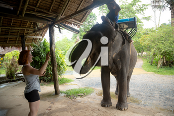Asian natural scenery. Young red-haired girl feeding an elephant after a walk. Popular attraction in Thailand