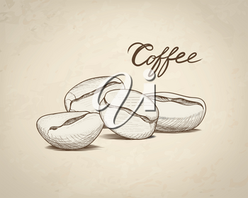 Coffee beans with handwritten lettering. Drink coffee banner hand drawn sketch. Line art label over retro background
