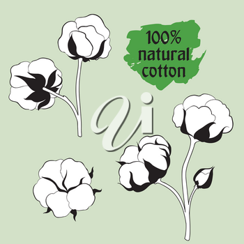 Cotton label.  Natural material sign. Flower cotton set. Hand drawn floral icon