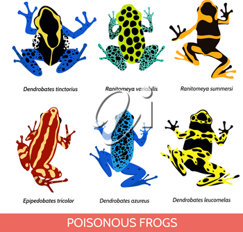 Set of different poisonous frogs. Vector illustration of poisonous frogs on a white background.Set of isolated frogs. Frog clip-art. Frog water and frog tree. Dyeing dart frog. Blue poison dart frog.
