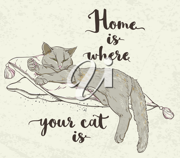 Vector background with cat on pillow and lettering.