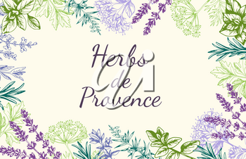 Vintage vector hand drawn background with Provencal spices and herbs.