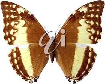 Royalty Free Photo of a Butterfly