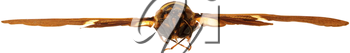 Royalty Free Photo of a Cicada in the Air