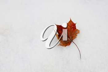 Closeup shot of brown red leaf fallen on the snow.