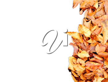 Frame from autumn leaves on the right side isolated on white.