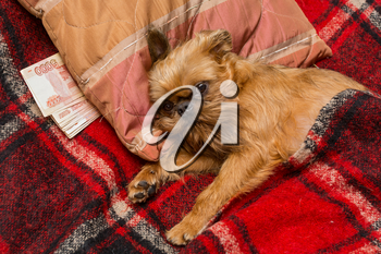 In a crisis, the dog hides savings under the pillow