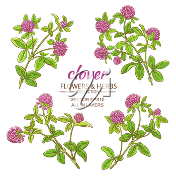 clover flowers vector set on white background