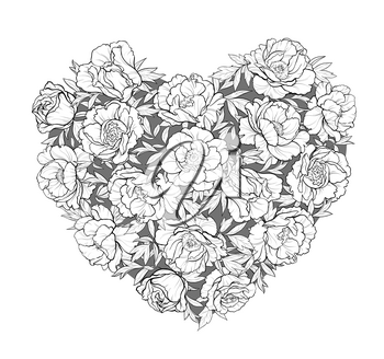 vector heart of   peonies on white background