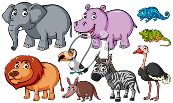 Different kinds of animals on white background illustration