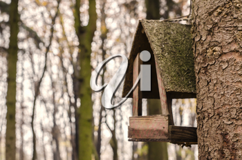 A wooden feeder on the background of a blurred forest. A seasonal photo.