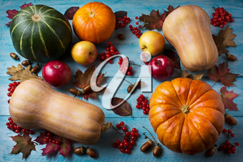 Thanksgiving  concept with pumpkins and apples on blue wooden background. Thanksgiving background with seasonal vegetables and fruits. Fall background