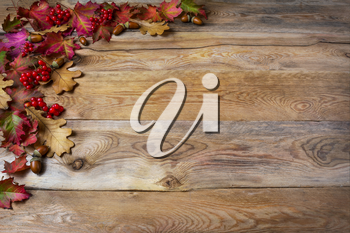 Thanksgiving  greeting with berries, acorn, fall leaves on wooden background. Thanksgiving background with seasonal symbols. Copy space.
