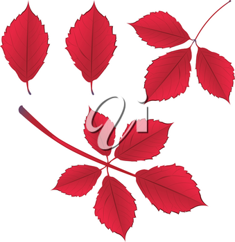 Colorful autumn leaves on branch over white background illustration.