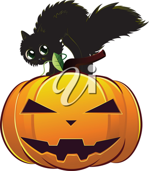 A cute black kitten on big Halloween pumpkin.
