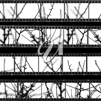 Contact sheet with photos of tree branches and twigs. Abstract background.