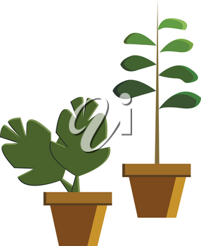 Two green potted plant depicting beautiful nature vector color drawing or illustration